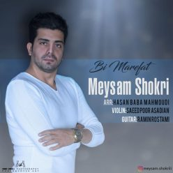 Meysam Shokri Bimarefat